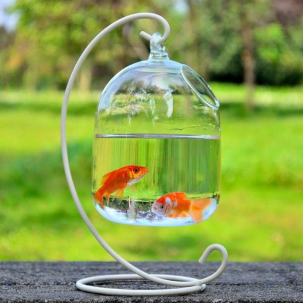 Bocal à poisson suspendu transparent | Idées cadeaux insolites