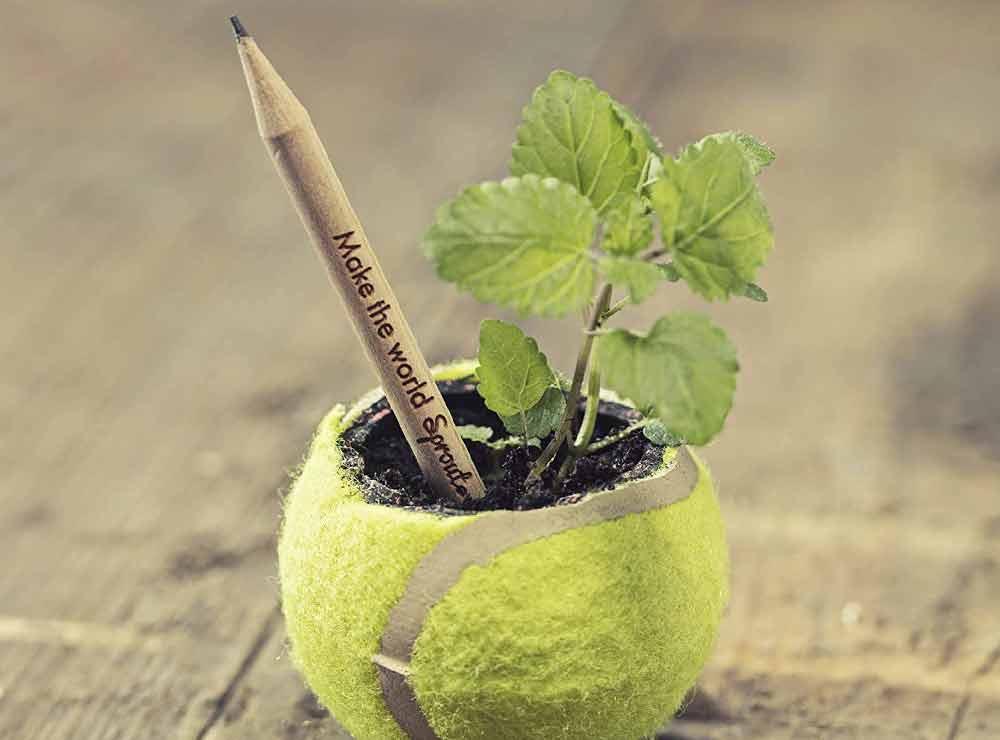 Crayons à planter   Idées cadeaux insolites et originales écologique