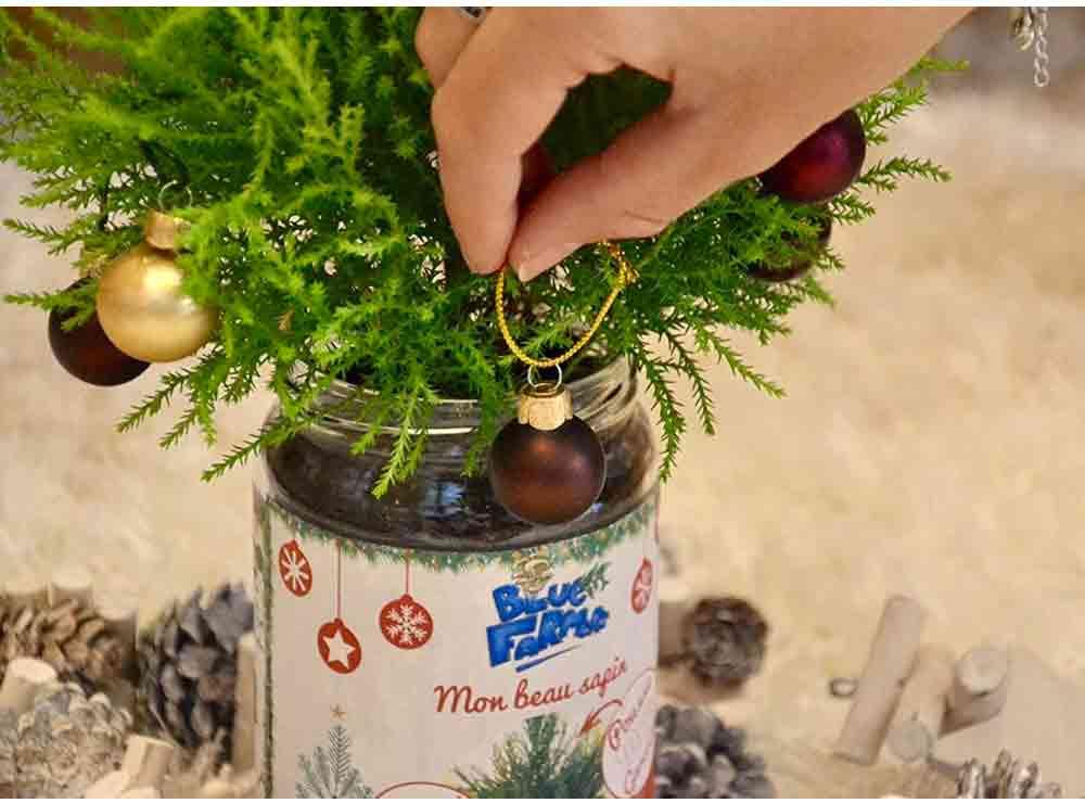 Sapin de Noël écolo en pot   Idées cadeaux insolites
