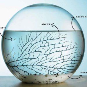 Écosphère : un écosystème dans une sphère en verre | Idées cadeaux originales insolites