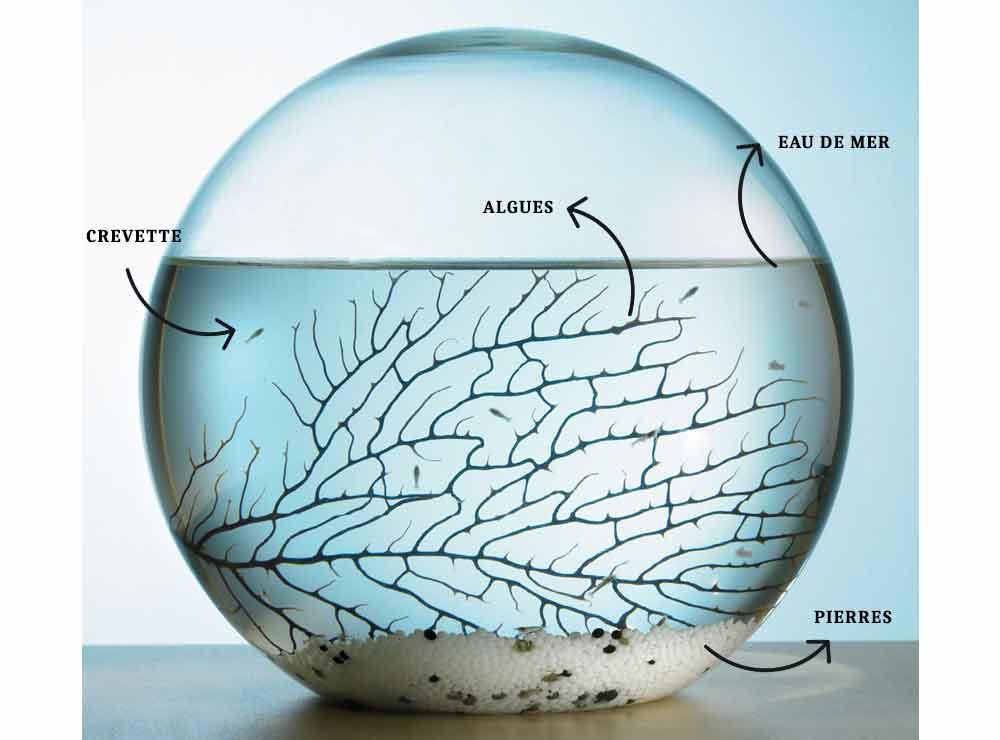 Écosphère : un écosystème dans une sphère en verre   Idées cadeaux originales insolites